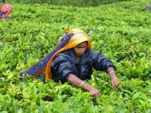 Agriculture Sector Heading Sri Lanka